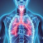 ¿Cuáles son los síntomas de los bronquios cerrados y qué medidas hay que tomar?