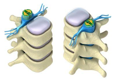 celulas hematopoyeticas