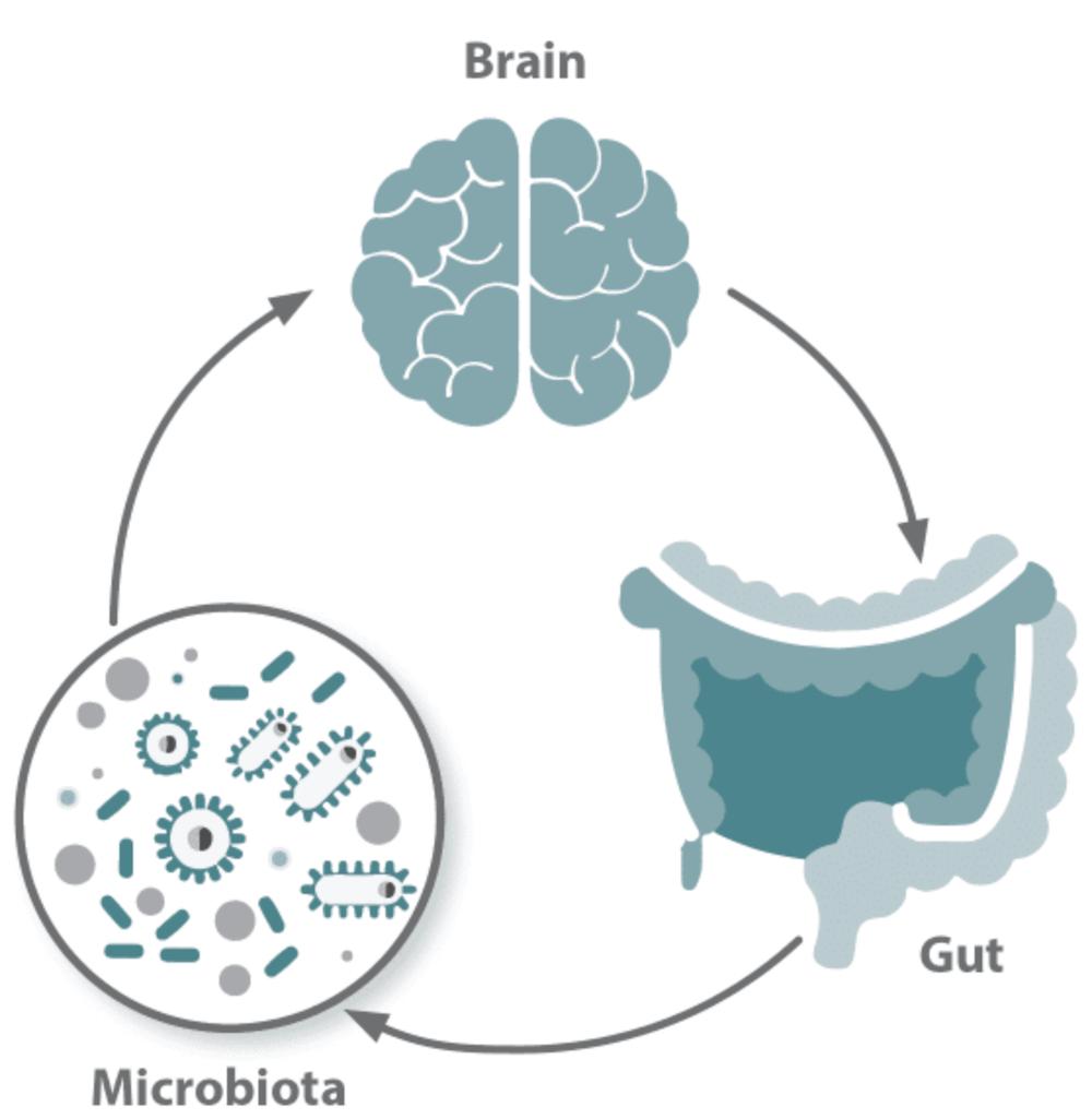 eje intestino cerebro esquema