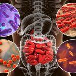 Bacterias intestinales: Cómo afectan a nuestro organismo