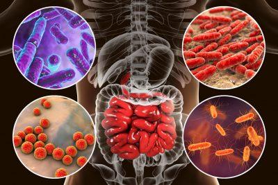 bacterias intestinales